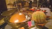 Almacque cactus