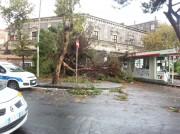 L'albero crollato sul distributore di benzina