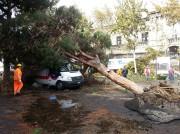 alberi caduti in via Dusmet