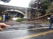 il secondo albero divelto in via Dusmet