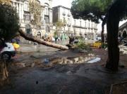 un altro albero caduto in via Dusmet
