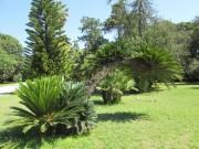 04 A - Villa Malfitano, il giardino 2