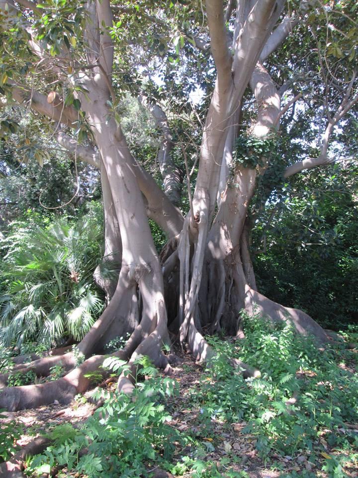 04 A - Villa Malfitano, il giardino 3