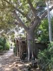 04 A - Villa Malfitano, il giardino 4