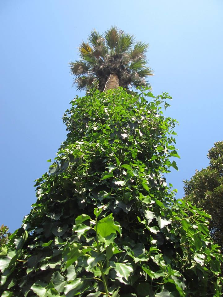 04 A - Villa Malfitano, il giardino 5