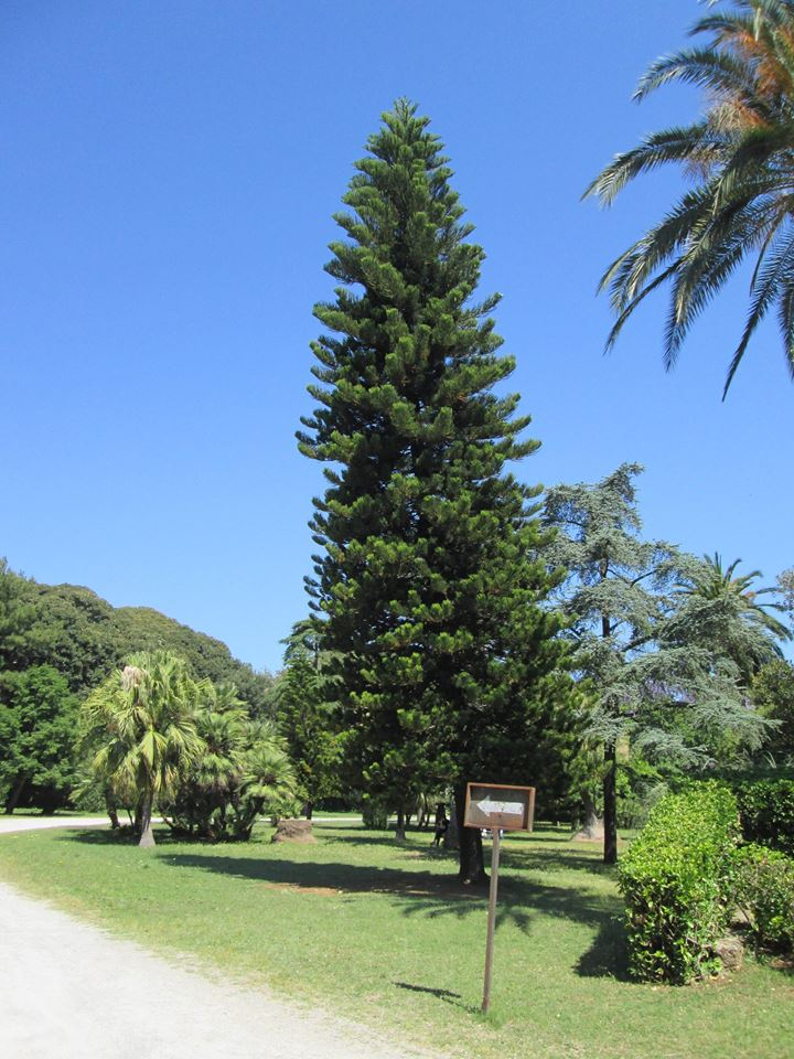 04 A - Villa Malfitano, il giardino