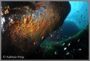 Ambiente marino Capo Milazzo, foto Frixa