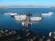 gabbie galleggianti acquacoltura