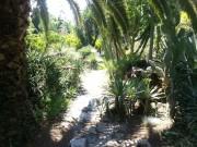 dove fiorisce la jacaranda 2016