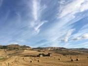 grano in Sicilia